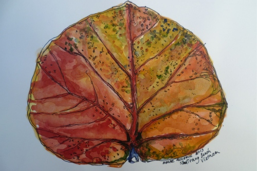Leaf Nha Trang, Vietnam. Pen and wash 21x30cm. 2013Ⓒ